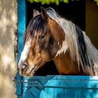 Hersonissos Horse Riding Tours
