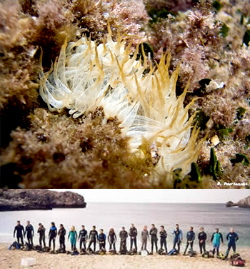 Diver's Club Chersonissos Crete
